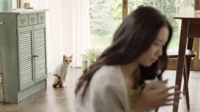 大谷英子と猫が共演がかわいい、ルービーナめぐりのCM
