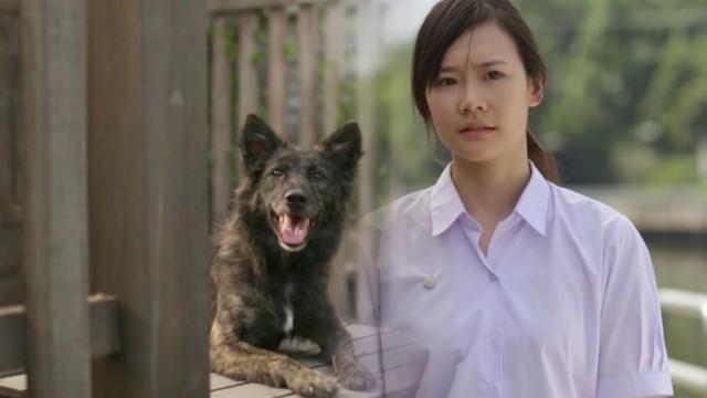 少女が獣医師を志したきっかけとは?タイのCMに世界が涙した